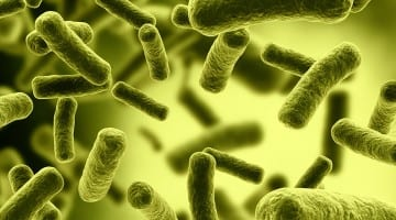 Southwestern Utah E. Coli Outbreak has Officials Scrambling as Second Child Dies