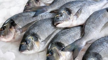 Food poisoning news and foodborne illness information for Raw fish food poisoning