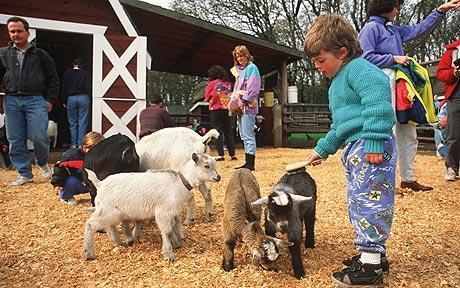 Oak Leaf Farm Goat E. Coli Outbreak