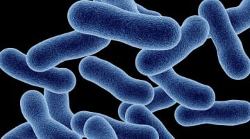 Listeria Recall Lawsuit