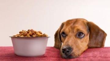 Radagast Pet Food expands recall for listeria contamination