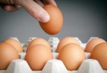 Salmonella Recall Eggs