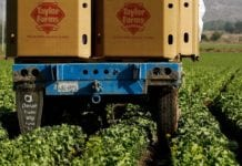 Taylor Farms Kale Medley salad blend causes Salmonella outbreak in Minnesota