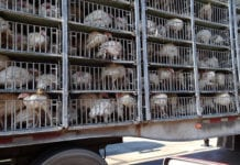 Foster Poultry Farms Recall