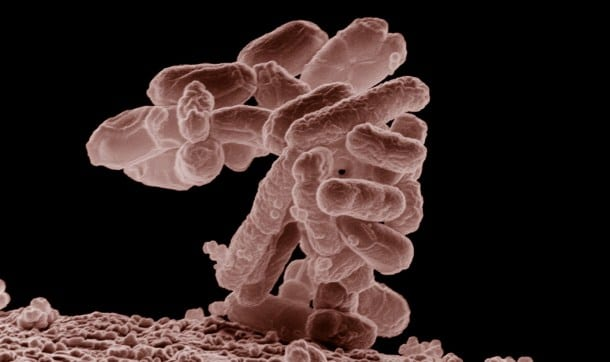 Salmonellosis, the infection caused by salmonella bacteria, often results in acute gastroenteritis, an illness that usually results in diarrhea and/or vomiting due to severe inflammation of the stomach and intestines caused by the bacteria. Infected individuals typically begin to experience diarrhea, fever, and abdominal cramps 8 to 72 hours after eating contaminated food.