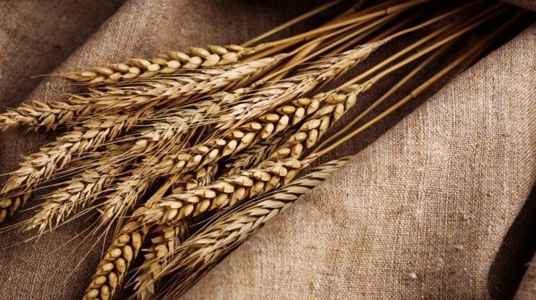 general mills flour e coli outbreak o121 grows