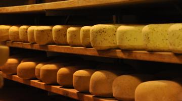 E coli STEC Grassfields Cheese Recall