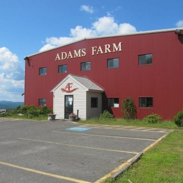 Adams Farm Recalls E coli contaminated beef veal bison