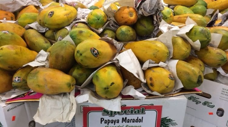 Papaya Salmonella Lawsuit