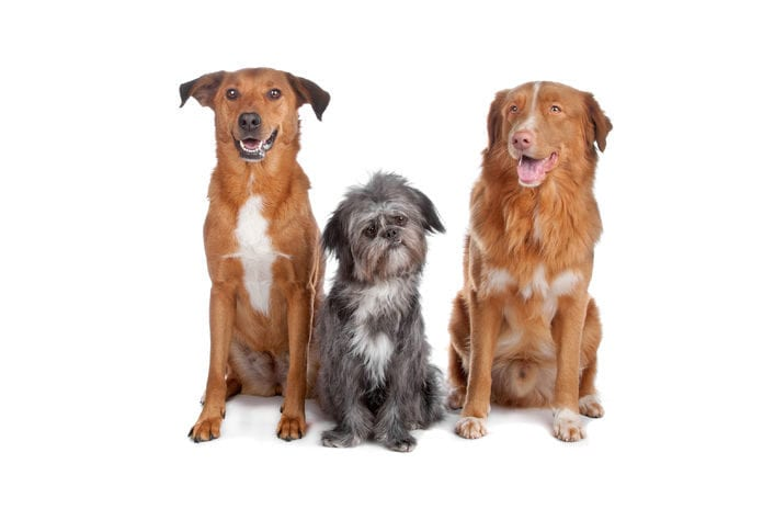 is salmonella curable in dogs