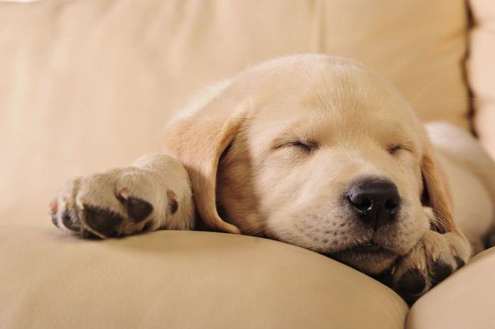Salmonella Lawsuit Dog food