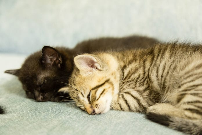 Go Raw, LLC, Recalls Quest Cat Food for Salmonella Contamination